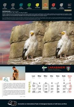 Calendario_2019 CITES6