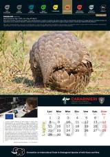 Calendario_2019 CITES7