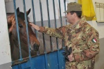 ospedale veterinario militare