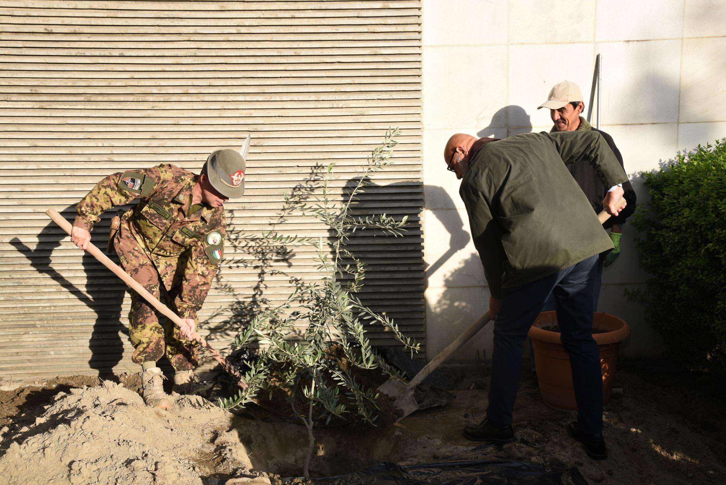 2. Afghanistan, l'Ambasciatore Roberto Cantone (a destra) e il Generale di Divisione Massimo Panizzi (a sinistra) trapiantano l'Ulivo della pace